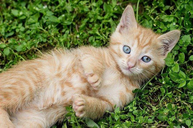 Schüler BU Kitten